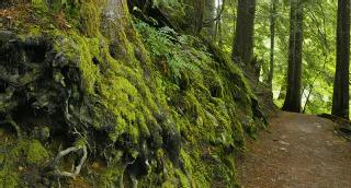 Viel Wald schützt vor Infektionen